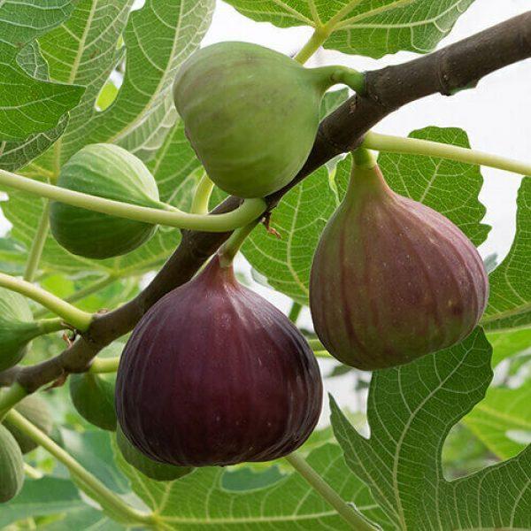 frutteto 5