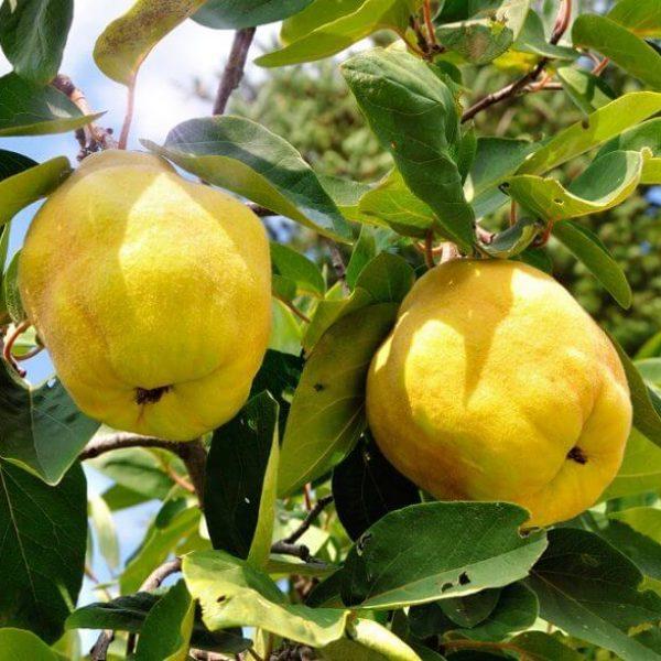 frutteto 7